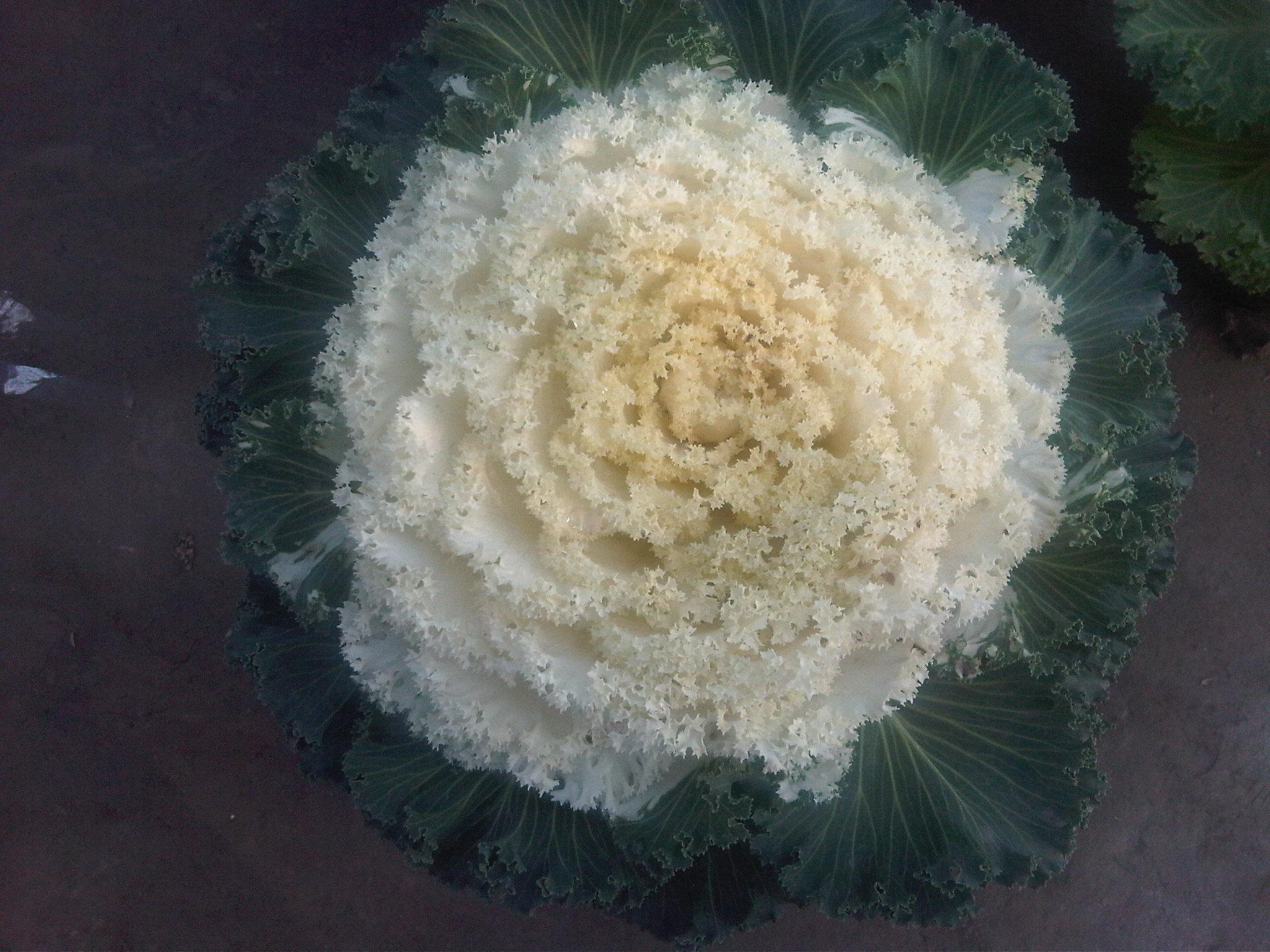 Flower of Intricacy