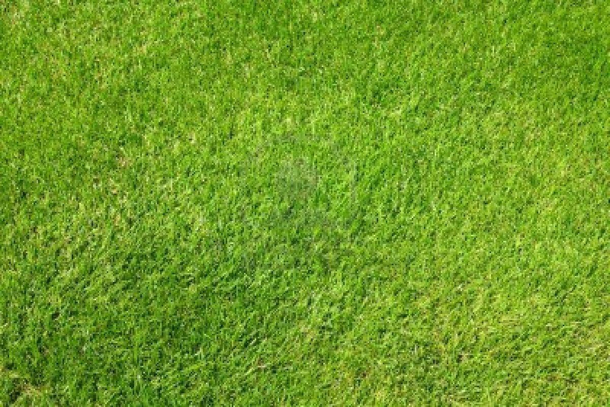 Putting Green Grass Texture | www.pixshark.com - Images ...