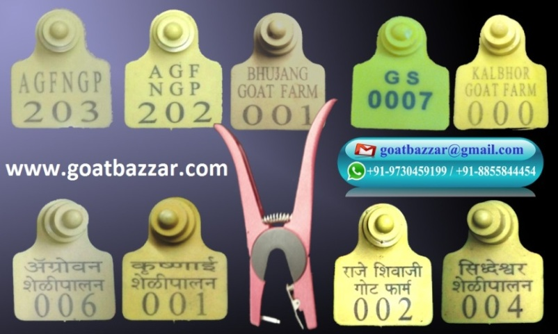 Goatbazzar com ! Goat Farm Maharashtra